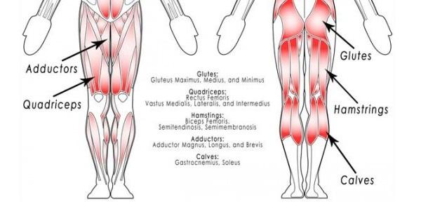 Short-anatomy-lesson